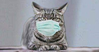هل تنقل الحيوانات الأليفة فيروس كورونا الى البشر؟