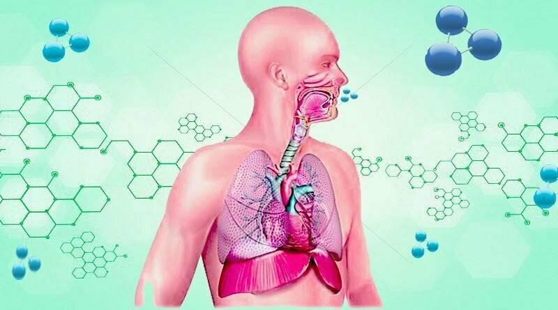 تعرف على المراحل التي يمر منها الأكسجين داخل الجسم