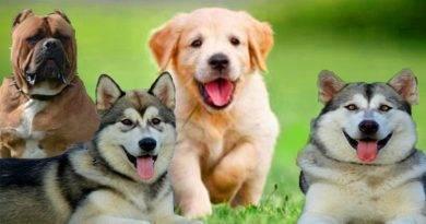 تعرف على بعض المعلومات حول الكلاب