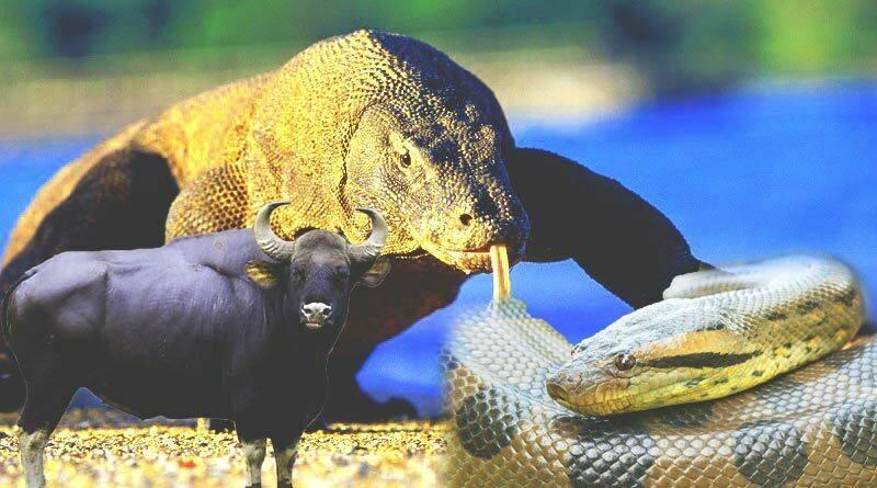 تعرف على أضخم الحيوانات في العالم