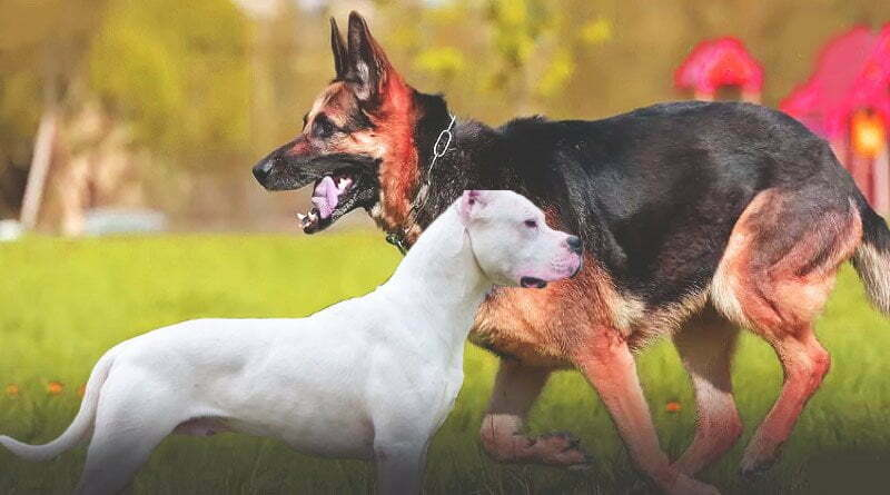 تعرف على أفضل الكلاب المطيعة في العالم
